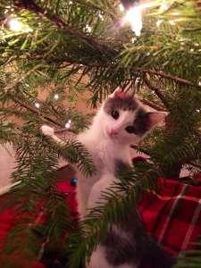 30 chiens et chats qui prennent un malin plaisir à détruire la magie de Noël