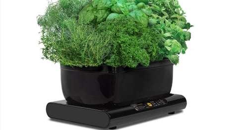 Faites pousser vos propres fruits et légumes toute l'année avec ce potager connecté ultra performant