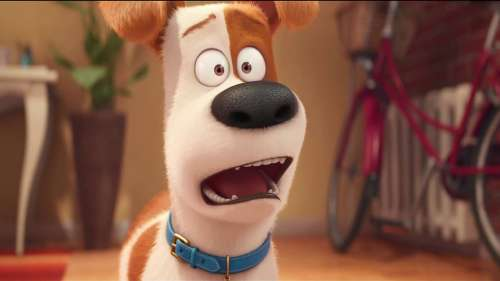 The Secret Life of Pets: Sweet, Funny and Manic Moments