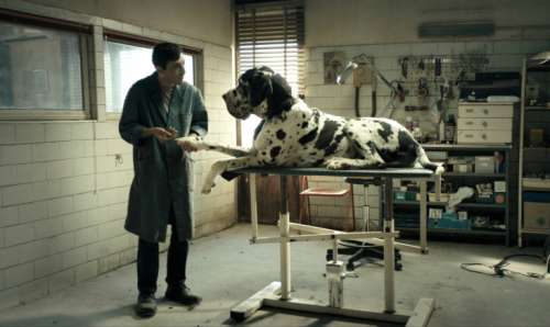 Le bestial «Dogman»sortira en DVD le 14 novembre prochain