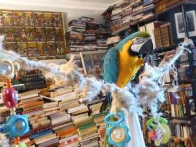 Insolite            Retour sur l'histoire de Voltaire, le perroquet fugueur