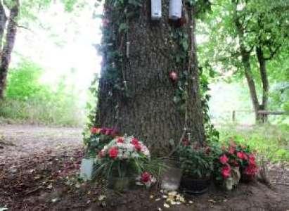 Insolite            Un étrange mémorial à « Titi » dans un chemin près du Cher, à Vierzon