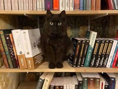 Mon Chat pitre : la ronron librairie qui lutte contre l'abandon des animaux