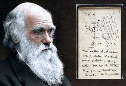Darwin : deux pages rescapées du manuscrit de L'origine des espèces