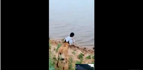 Quand un chien protège une petite fille qui est au bord de l'eau