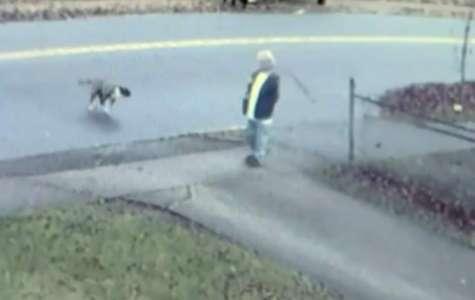 La voisine entend des cris désespérés, voit une meute de chiens et court apporter son aide