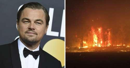 Leonardo DiCaprio promet de donner 3 millions de dollars pour la tragédie des feux de brousse en Australie