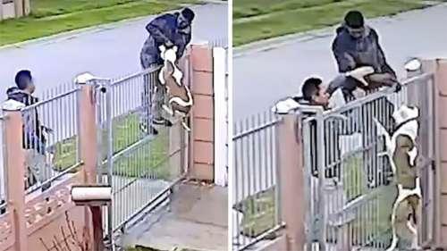 Un homme filmé en train d'essayer de voler un pitbull en le soulevant par le collier au-dessus d'une clôture