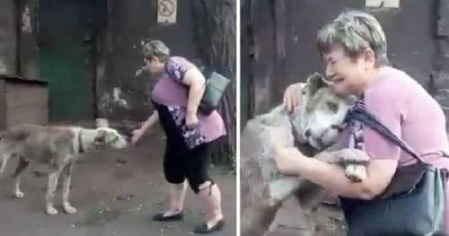 Une femme arrive au refuge pour animaux, remarque soudain qu'un des chiens est celui qui lui avait été volé est le sien