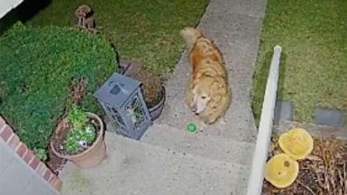 Un chien se présente au milieu de la nuit – quand l'homme voit ce qu'il a dans la bouche, il se précipite à la porte