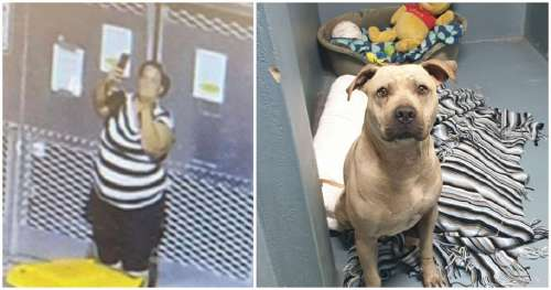 Une femme prend un selfie, fait un doigt d'honneur en abandonnant son chien au refuge