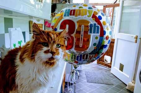 Rubble le plus vieux chat du monde meurt à 31 ans – repose en paix