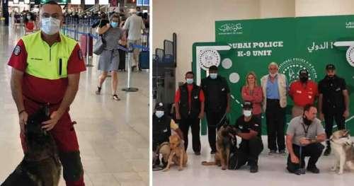 Des chiens entrainés à détecter le COVID-19 sont à 100% fiables