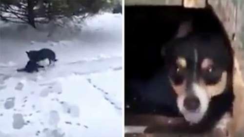 Subitement, le propriétaire voit la chienne traîner une créature dans la neige glacée – le suit jusqu'à ce qu'il atteigne la niche
