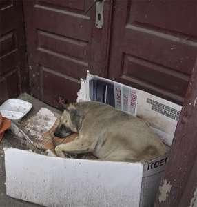 La chienne erre dans la rue depuis 6 ans – sa réaction à la présence inattendue d'une touriste est inégalable