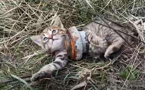 Un chaton vivant dans une région retirée reste coincé dans un tuyau de fer. Par chance, ce passant est préparé à un sauvetage audacieux