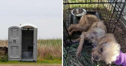 Un chien enfermé dans des toilettes puantes en plein air, laissé pour mort – trouvé par une amie des animaux qui prend une décision qui va changer sa vie