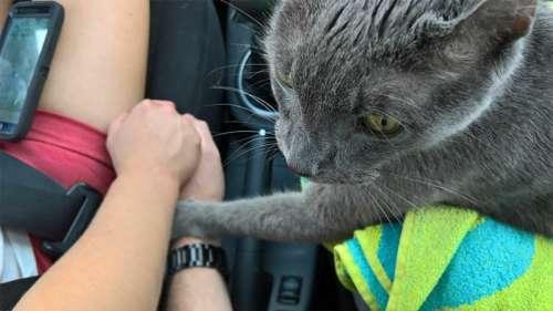 Un chat mourant tend sa patte à son propriétaire lors de son dernier passage chez le vétérinaire