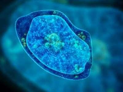 Un mystérieux virus découvert dans un lac brésilien