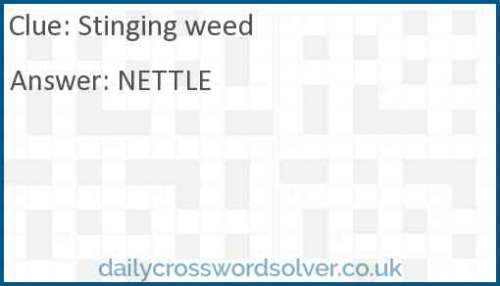 Stinging weed crossword answer