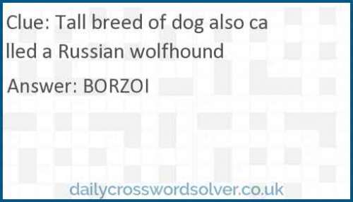 Tall breed of dog also called a Russian wolfhound crossword answer