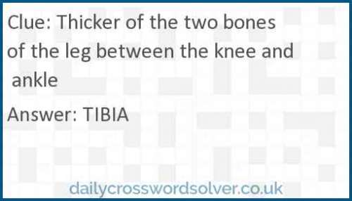 Thicker of the two bones of the leg between the knee and ankle crossword answer
