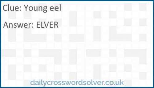 Young eel crossword answer