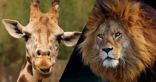TEST : Quel animal de la savane êtes-vous ?