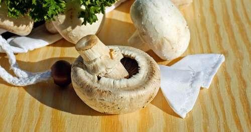 Manger régulièrement des champignons protège efficacement votre cerveau