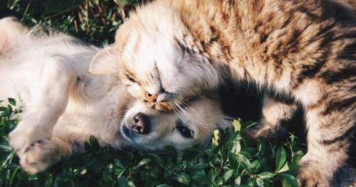 Voici pourquoi vous ne devez surtout pas administrer l'anti-puces de votre chien à votre chat