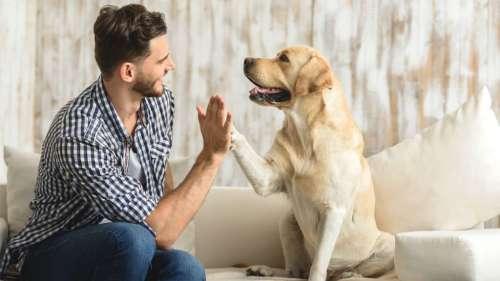 Si nous apprenions à écouter les chiens, des milliers de morsures pourraient être évitées