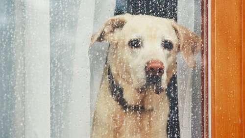 Spotify lance les «Pet Playlists» afin de déstresser vos animaux de compagnie lorsqu'ils sont seuls