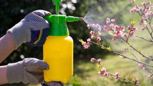 La ministre de l'Écologie veut interdire l'usage non agricole de pesticides, et ce, avant cet été