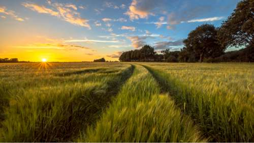 Comment les Pays-Bas mettent-ils l'architecture au service de l'agriculture pour nourrir le monde ?