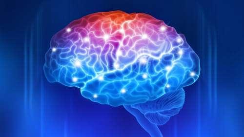 Il y aurait au moins 9 «expressions de genre» dans le cerveau humain