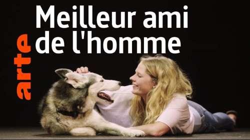 Découvrez à travers ces histoires le lien si fort qui unit l'Homme et le chien