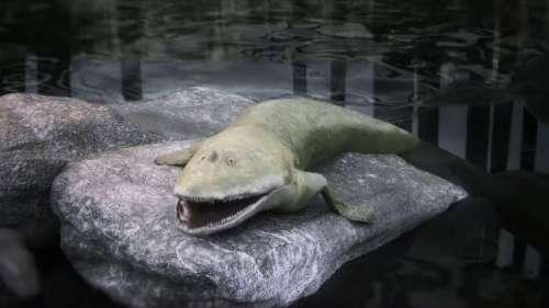 Ce fossile de poisson préhistorique permet de mieux comprendre l'évolution des mains des vertébrés