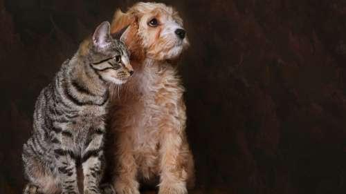 La vente de chiens et de chats interdite en animalerie et aux élevages industriels en Angleterre