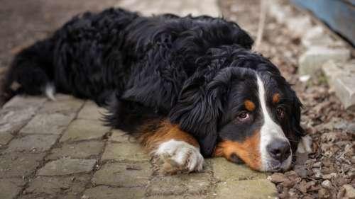Le saviez-vous ? Un chien a fidèlement gardé la tombe de son maître pendant 12 ans
