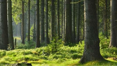 Les forêts de France sont en grave danger à cause du réchauffement climatique