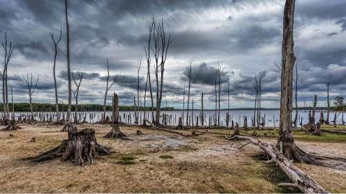 Réchauffement climatique : l'excès de CO2 dans l'atmosphère fait mourir les arbres prématurément