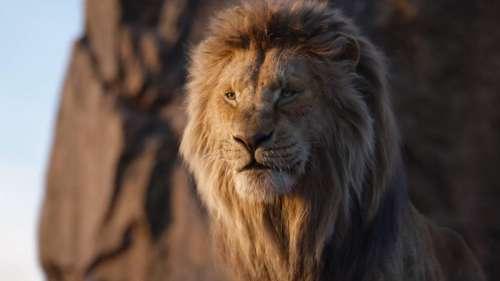 Un préquel du Roi Lion est en préparation avec le réalisateur de Moonlight aux commandes !