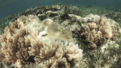 La Grande Barrière de corail a perdu la moitié de ses coraux en seulement 25 ans