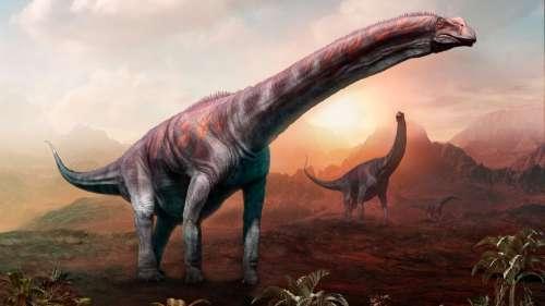 Ce dinosaure géant découvert en Argentine serait le plus grand animal terrestre de tous les temps