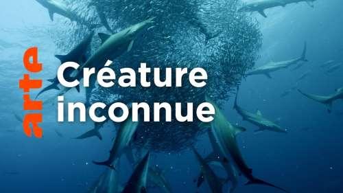 Partez à la rencontre des requins à travers ce documentaire aux images à couper le souffle