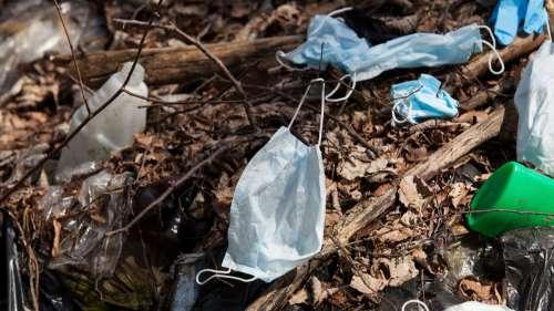 Les scientifiques alertent : nos déchets liés au Covid-19 tuent les espèces à un rythme inquiétant