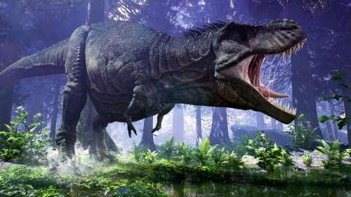 Vous marchez probablement plus rapidement que le terrible Tyrannosaure