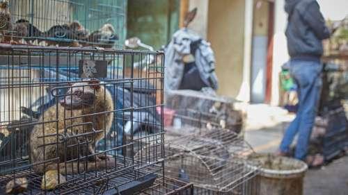 L'OMS veut suspendre la vente de mammifères sauvages vivants sur les marchés