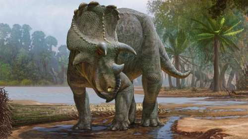 Ce nouveau dinosaure à cornes découvert aux États-Unis était un ancêtre du tricératops