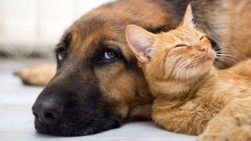Le Royaume-Uni reconnaît officiellement les animaux comme des «êtres sensibles»